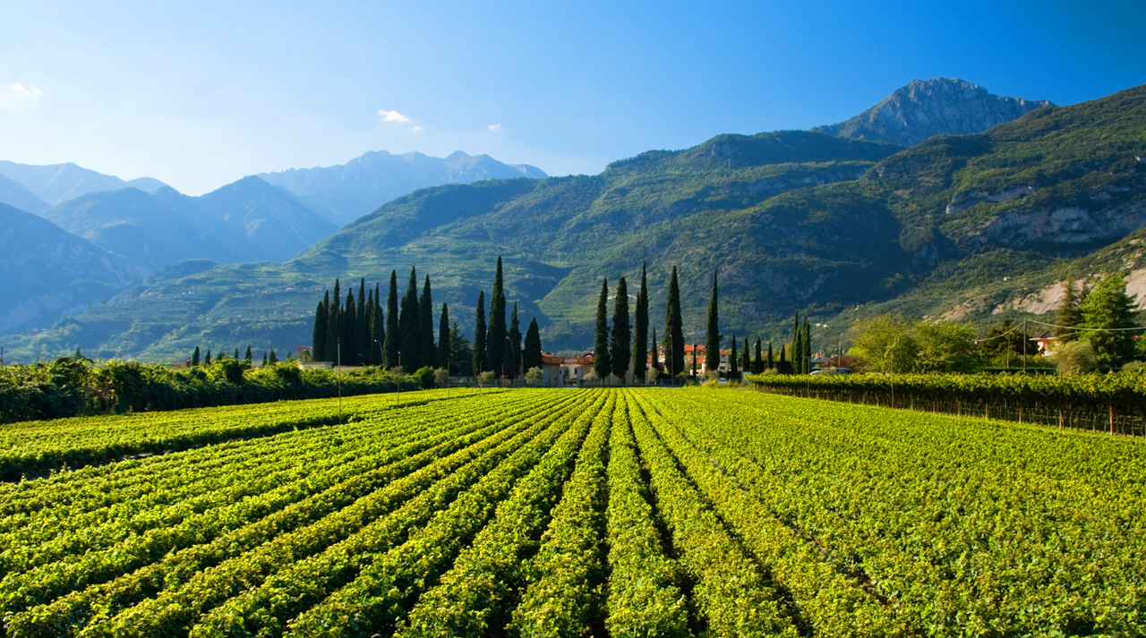 trentino-alto-adige-southern-vineyard-near-garda-lake